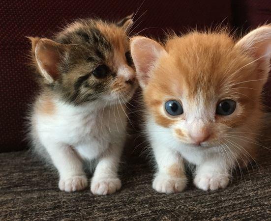 お疲れ飼い主さん必見!猫のお世話を『頑張りすぎない』コツ5選