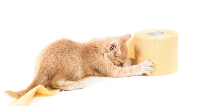 猫が尿漏れをする原因と考えられる病気