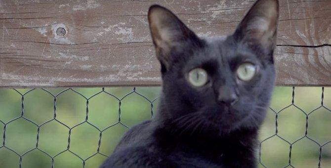 お外に出たら虫の声が聞こえてキョロキョロする猫さん