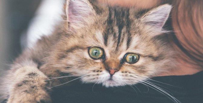 猫が『分離不安症』になるとみせる行動5つ