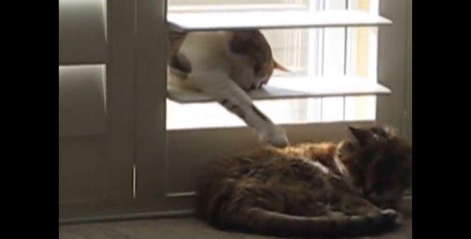 失礼いたしニャした…イタズラしたあと窓を閉めて退場する猫ちゃん