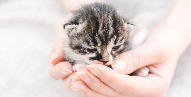 猫を飼うには かかる費用と注意点