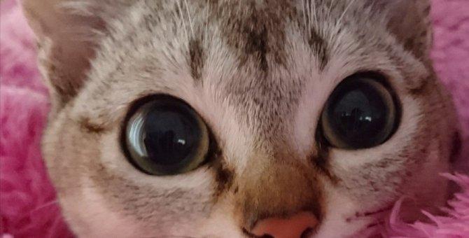 Laylaの12猫占い 10/28~11/3までのあなたと猫ちゃんの運勢