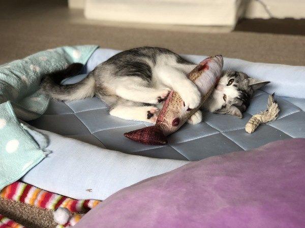 猫に必要な栄養素を一挙公開