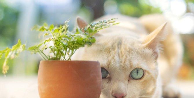 猫にとっての『苦手な動物』3選