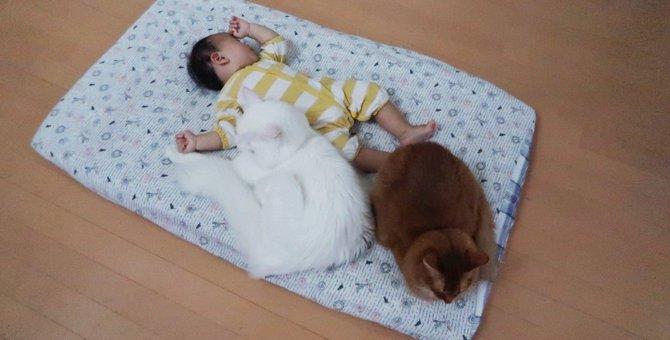犬みたいなサイズ感と超話題の猫さん達。子供達との心の絆が素敵!
