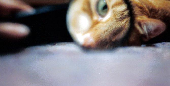 猫の白目が見えない理由とその役割