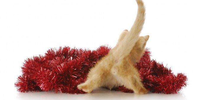 猫の肛門が赤い時に考えられる病気と治療法