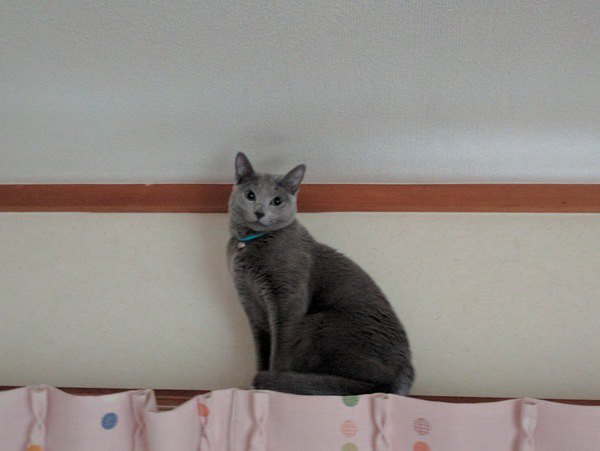 猫がカーテンをよじ登るのはなぜ?5つの理由と対策