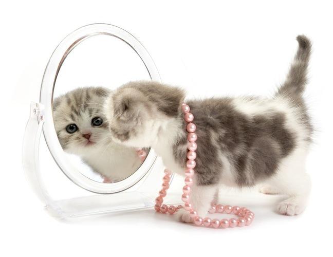 猫がモチーフになっている指輪!おすすめ商品まとめ