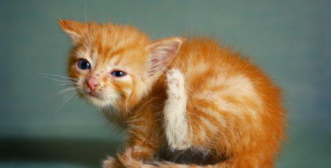 猫にダニが寄生する原因と駆除する方法、予防法