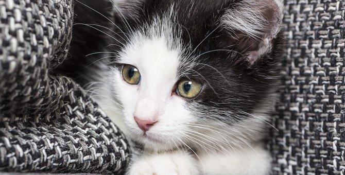 心配性な猫の3つの特徴