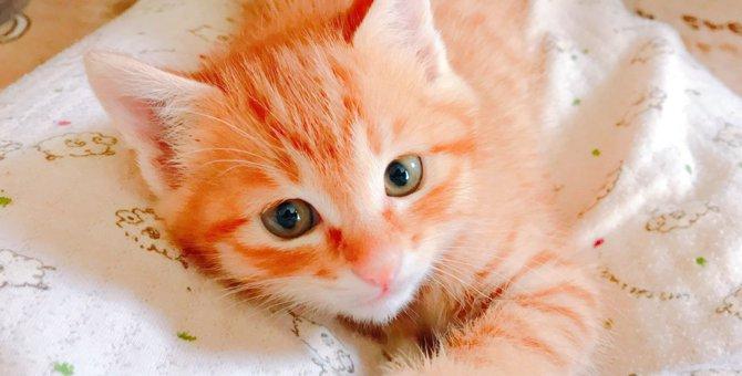 ゴロゴロ、スリスリ♡猫ちゃんの色々な仕草の理由