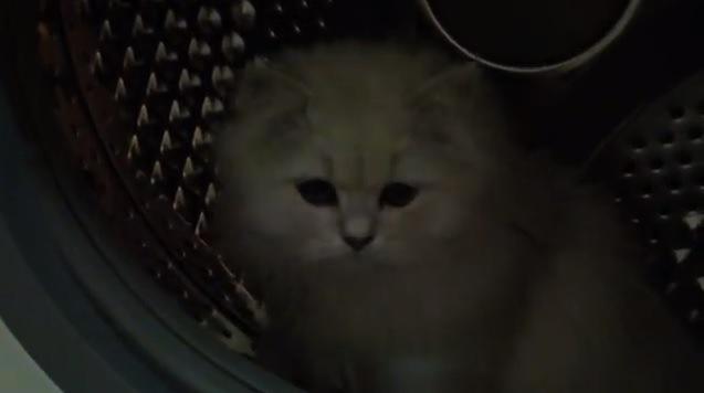 猫だって回し車がほしいニャ!ドラム式洗濯機でニャンコ激走!