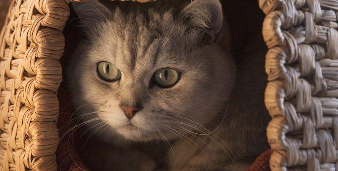猫ちゃんが箱状のものや鞄などに入りたがるのは何故?