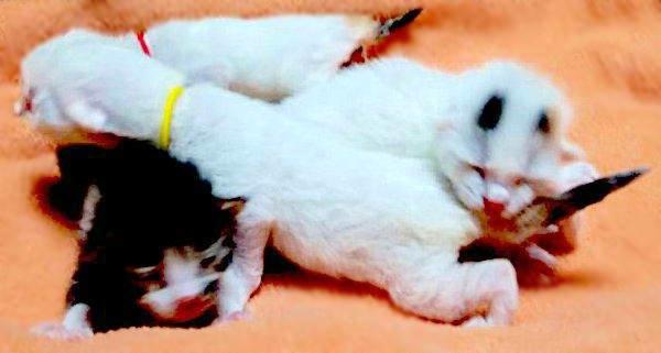 【緊急保護】冷たい風の中、生まれたての子猫が4匹…つないだ「命の灯」