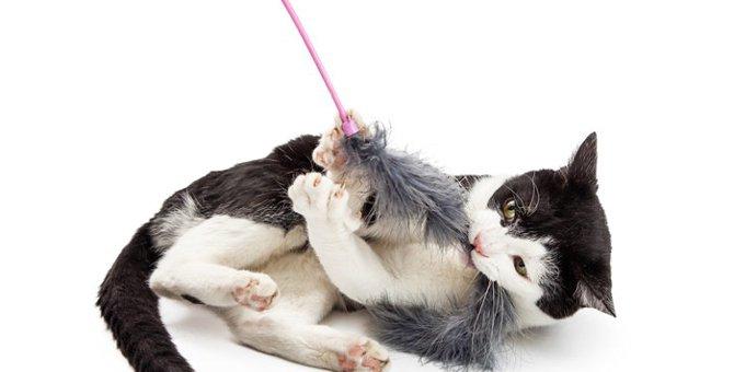 猫がキックをする4つの心理とオススメのおもちゃ