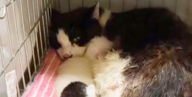 腎不全の余命短い老猫…奇跡のハプニングに感動!