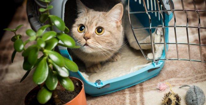 猫のお留守番にはケージを使うべき?使い方や注意点、おすすめ商品について