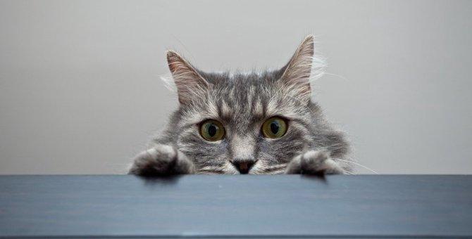 猫の目が気になる…監視されてる気がする瞬間8つ