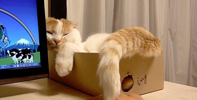 しっぽでぽんぽん!やさしく飼い主さんの手をなでる猫さん!