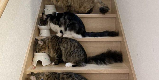 猫に最適な『フードボウル』の正しい選び方5つ