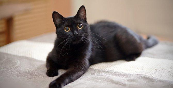黒猫の里親になるには?探す方法や譲渡までの流れ