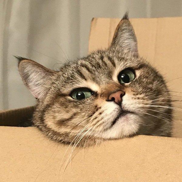 野良猫をお迎えする際に注意すべきポイント5つ