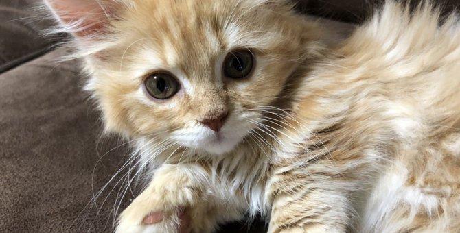 LAYLAの12猫占い【4/20〜4/26】のあなたと猫ちゃんの運勢