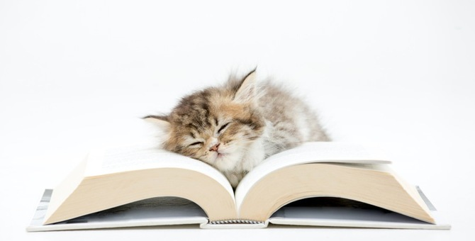 猫好きにおすすめしたい小説3選!泣ける、笑える、感動できる名作