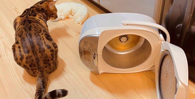 【大惨事】炊飯器をひっくり返した猫への制裁が『愛』に溢れすぎている件