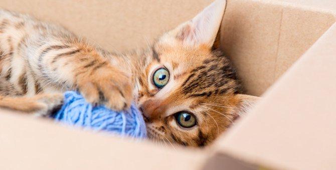 『面倒臭がり』でも猫は飼える?考えられる3つのリスク
