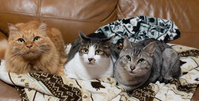 猫が『運動』しない4つの原因と対処法