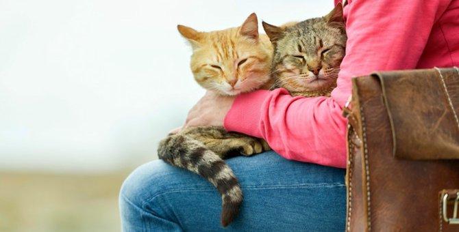 カールアップカフェにいる猫が可愛すぎる!店舗情報から評判・口コミまで