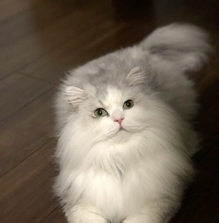 猫の毛の「ダブルコート」と「シングルコート」ってなに?