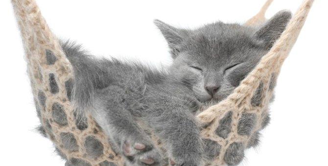 猫がリラックスしている時の6つの仕草