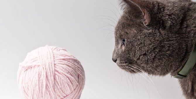 猫が毛糸玉を好む3つの理由