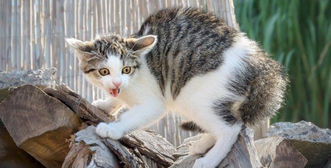 猫が『嫌だなー』と思っているサイン3つ