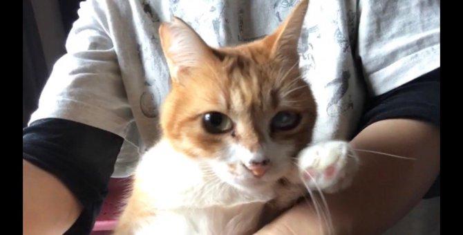 ヨチヨチ歩きの『ヨッチくん』!兄妹猫の悲しい死を乗り越え幸せな姿に涙