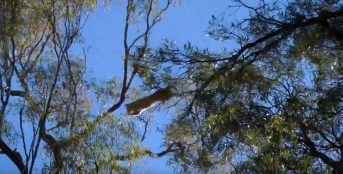 降りられにゃい…でも隣の木にジャンプ!木の上で6日間も過ごした猫救出