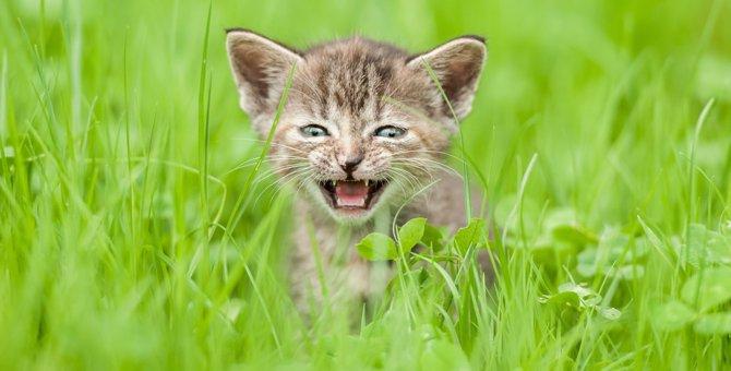 猫の鳴き声の英語での言い方