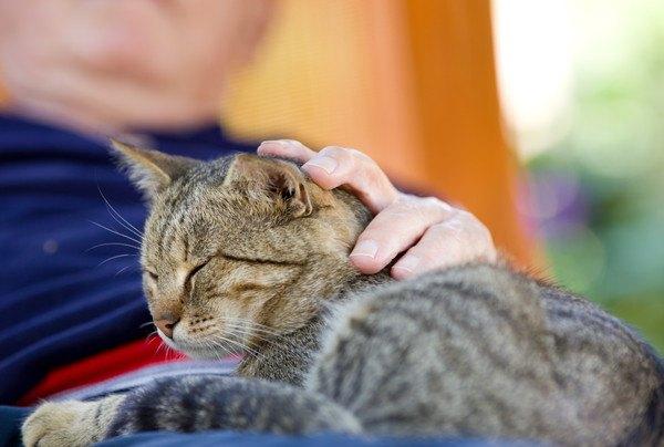 猫のアニマルセラピーがすごい!人を癒やす効果とは