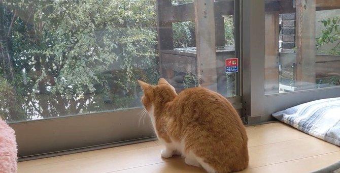 季節外れの雪に猫ちゃん釘付け!