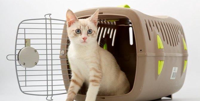 猫との引っ越しで押えておきたい5つのポイント
