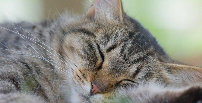 猫を早死にさせるかもしれない6つの飼い方