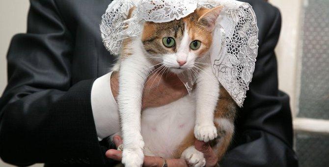 愛猫を自分の結婚式に参加させることってできるの?