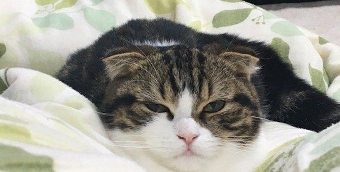 猫はいつから人間と生活するようになったの?猫と人間の歴史
