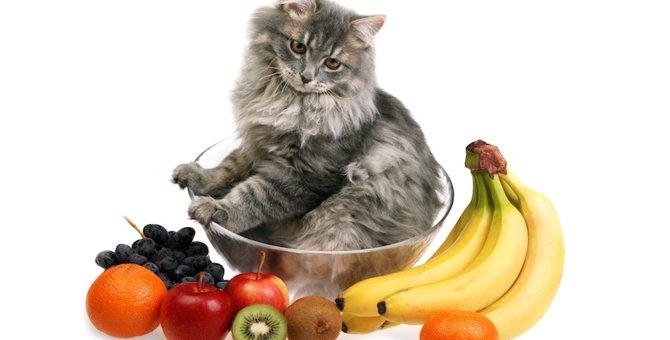猫はキウイを食べても大丈夫!効果や与え方
