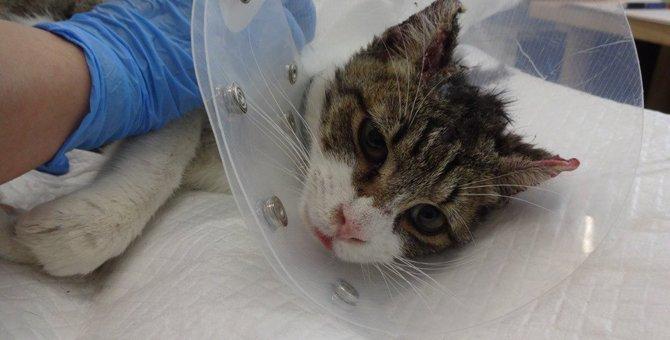 下関市で発生している連続猫虐待事件 全身大やけどを負った猫達
