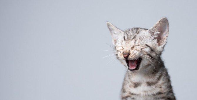 猫の『口臭』の原因は?考えられる病気4つと予防法